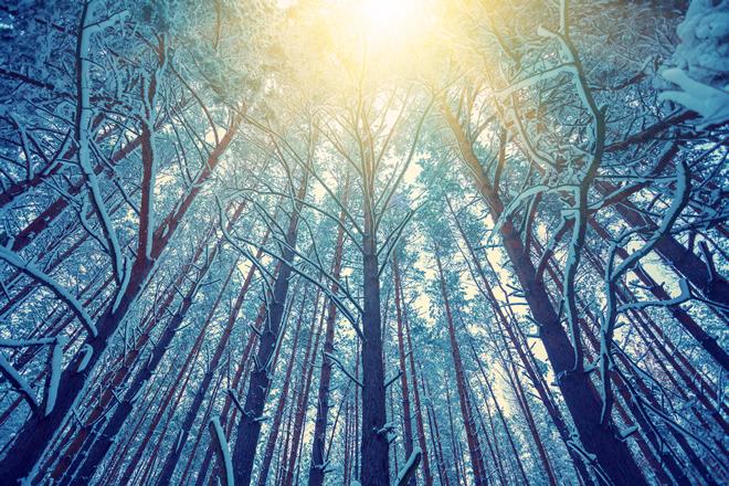 Winter light through the trees