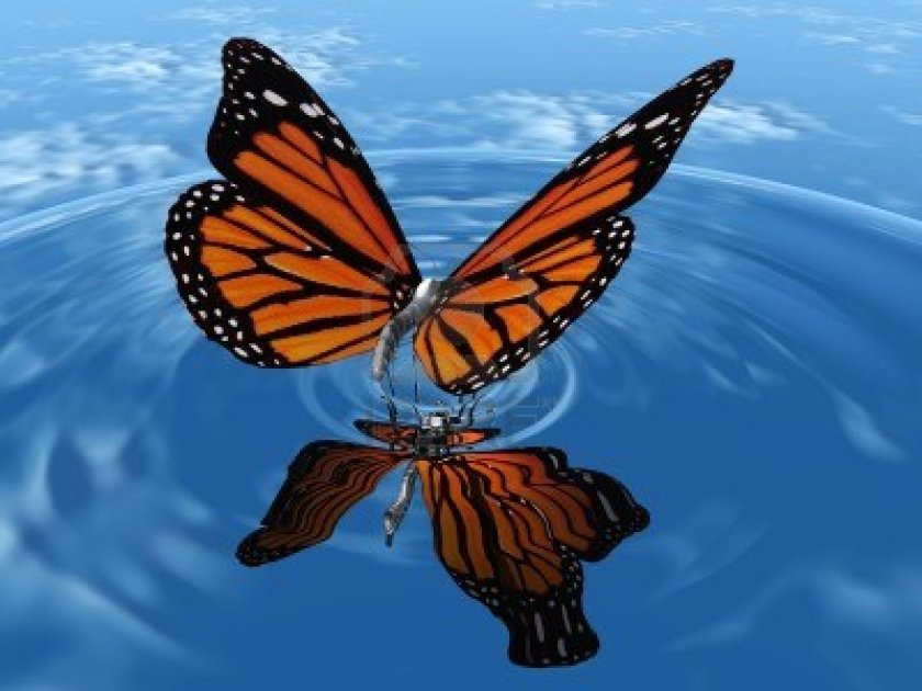 Butterfly: a symbol of resurrection