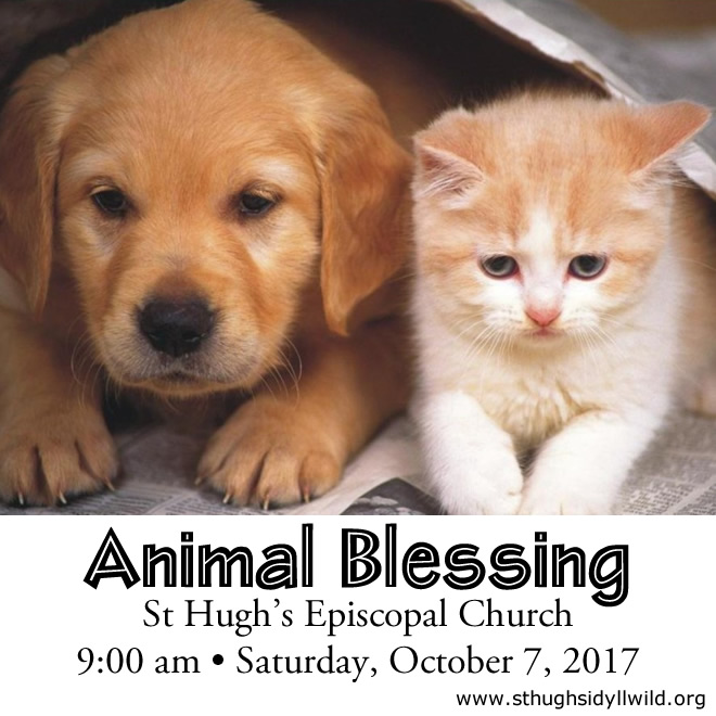 2017 Animal Blessing